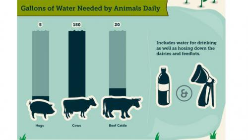 water-needed-livestock